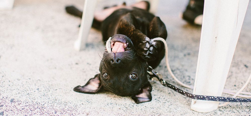 Puppy Nipping and Biting Banner Image