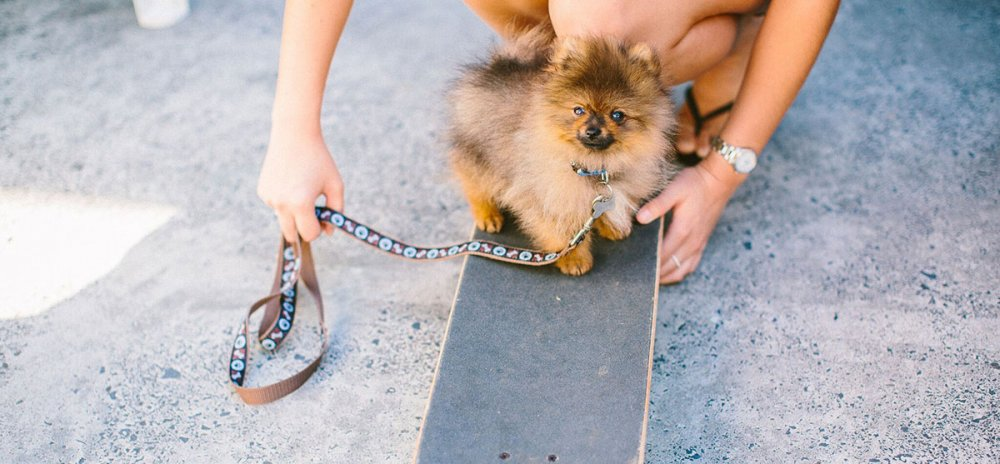 Training Your New Puppy Banner Image